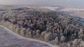 field ice : aerial view winter landscape snow covered field and trees in countryside. winter in countryside. Snow covered farmland and trees during winter