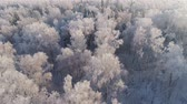 hűvös : aerial view winter landscape forest covered snow, frost. Frozen branches with hoarfrost in winter forest on sunny day