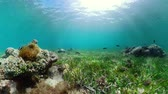 šnorchl : Coral reef and tropical fishes. The underwater world of the Philippines.