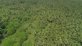 owoc : Aerial view grove of palm trees in the hills against sky and clouds. Hills covered with green vegetation and coconut palms. Philippines, Luzon. Wideo
