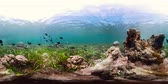 explorar : Tropical Fishes on Coral Reef, underwater scene. Camiguin, Philippines. Travel vacation concept