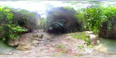 view from above : River in the rainforest through the green jungle 360VR. River in the green forest.