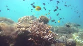 plavání : Coral reef underwater with tropical fish. Hard and soft corals, underwater landscape. Travel vacation concept