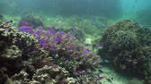 cay : Underwater fish reef marine. Tropical colorful underwater seascape with coral reef. Camiguin, Philippines.