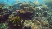cay : Tropical coral reef and fishes underwater. Hard and soft corals. Underwater video. Camiguin, Philippines.