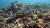 cay : Tropical Fishes on Coral Reef, underwater scene. Camiguin, Philippines. Travel vacation concept