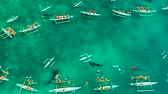 whale : Tourists are watching whale sharks in the town of Oslob, Philippines, aerial view. Summer and travel vacation concept