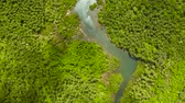 toupie : Mangrove trees in the water on a tropical island. An ecosystem in the Philippines, a mangrove forest. Vidéos Libres De Droits
