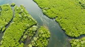 toupie : Aerial view of rivers in tropical mangrove forests. Mangrove landscape, Siargao,Philippines. Vidéos Libres De Droits