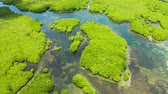 tranqüilidade : Aerial panoramic mangrove forest view in Siargao island,Philippines. Mangrove landscape