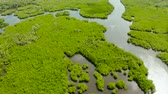 toupie : River in tropical mangrove green tree forest top view. Mangrove jungles, trees, river. Mangrove landscape