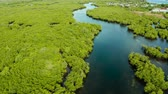 tranqüilidade : River in tropical mangrove green tree forest top view. Mangrove jungles, trees, river. Mangrove landscape