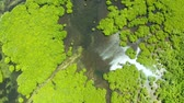 tranqüilidade : Aerial view of rivers in tropical mangrove forests. Mangrove landscape, Siargao,Philippines. Stock Footage