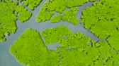 tranqüilidade : Mangrove green forests with rivers and channels on the tropical island, aerial drone. Mangrove landscape.