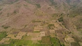 mısır tarlası : aerial view agricultural farmland with sown green,corn, tobacco field in countryside backdrop mountains. agricultural crops in rural area Java Indonesia. Land with grown plants of paddy
