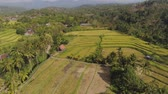 reis : aerial view rice fields, terrace and agricultural land with crops at sunset. aerial view farmland with rice terrace agricultural crops in countryside Indonesia,Bali Stock Footage