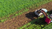 maquinaria : Harvesting carrots with farm machinery and truck to transport the carrots to a processing plant.