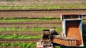 maquinaria : Tractor with a carrot harvester on agricultural land. Aerial view of Harvesting Carrots.