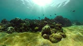 hloubka : coral reef and tropical fish underwater world diving and snorkeling on coral reef. Hard and soft corals underwater landscape