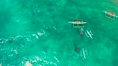 whale : People snorkeling and and watch whale sharks from above. Oslob, a famous spot for whale shark watching. Philippines, Cebu. Stock Footage