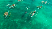魚類 : People snorkeling and and watch whale sharks from above. Oslob, a famous spot for whale shark watching. Philippines, Cebu. 動画素材