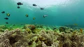 魚類 : 360 panorama: Tropical coral reef. Underwater fishes and corals. Camiguin Philippines