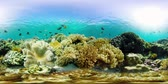 魚類 : Coral reef underwater with tropical fish 360VR. Hard and soft corals, underwater landscape. Travel vacation concept