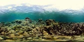 魚類 : Tropical coral reef and fishes underwater. Hard and soft corals. Underwater video. Camiguin, Philippines.