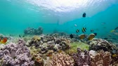 魚類 : Underwater Scene Coral Reef 360 panorama. Tropical underwater sea fishes. Camiguin, Philippines.