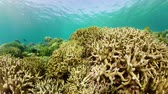 魚類 : 360 panorama: Coral reef and tropical fishes. The underwater world of the Philippines.