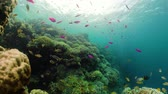 魚類 : Tropical fishes and coral reef underwater. Hard and soft corals, underwater landscape. Travel vacation concept 動画素材