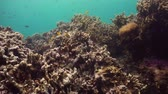 魚類 : Underwater fish reef marine. Tropical colorful underwater seascape with coral reef. Camiguin, Philippines.