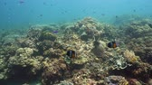 cay : Coral reef underwater with fishes and marine life. Coral reef and tropical fish. Camiguin, Philippines.