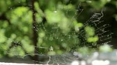 Spider web blowing in the wind Стоковые видеозаписи