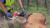 Woodcutter cuts tree trunk using chainsaw before transportation. Falling tree, what is fell few minutes ago ready for delivery