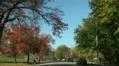 weather : Driving in a park Stock Footage