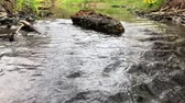 brooks : Gurgling water stream over stones and boulders