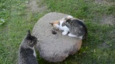 domestic : two cats and old millstone in garden