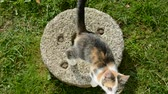 lend : young cat on old millstone in farm