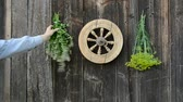 meal : hanging fresh medical herbs bunch on old wooden wall