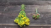herb : hanging on wooden wall St John's wort and wild strawberry bunches Stock Footage