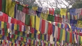 local de nascimento : trees with Buddhist praying flags. Lord Buddha birthplace in Lumbini, Nepal
