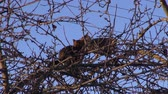 piada : two cats  on spring apple tree treetop branches in city garden