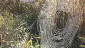 catching the wind : Cobwebs in autumnal meadow in the morning sun Stock Footage