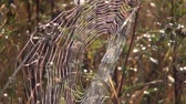 catching the wind : Cobweb in autumnal meadow in the morning sun Stock Footage