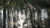 overflow pond : Spring flood in birch tree forest Stock Footage