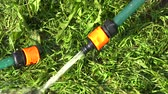 rubber tubing : Gardeners hands connecting two watering hoses on lawn, 4K