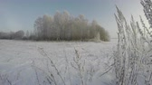 field : Hoarfrost covered landscape with trees and grass stalks on sunny misty winters morning, time lapse 4K