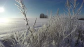 time : Frosted snow covered landscape on sunny winter day with hoarfrost covered grass stalks, time lapse 4K