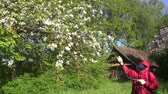 pesticide : Farmer spraying flowering apple tree in may on sunny morning with pesticides Stock Footage